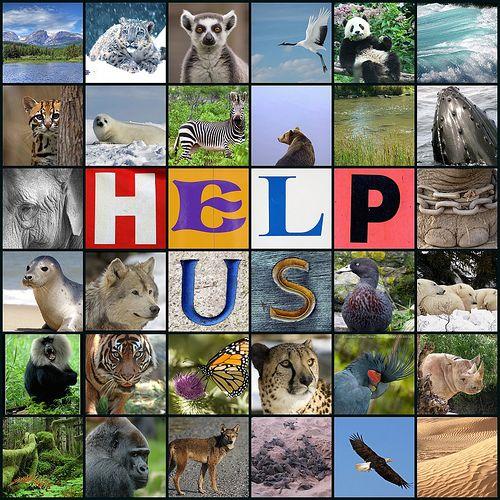 Države z največ ogroženimi živalskimi vrstami