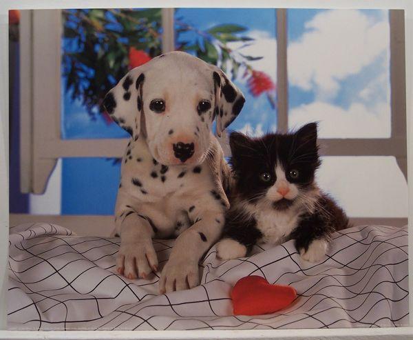 Pravilnik o zaščiti hišnih živali