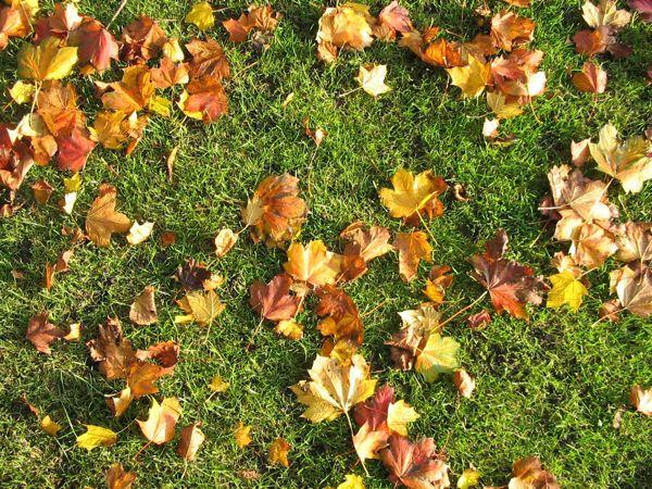 Kam boste pa vi pometli odpadlo listje?