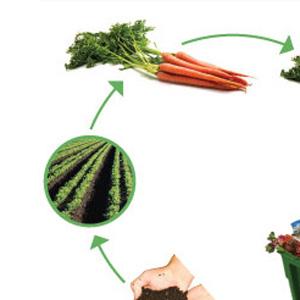 Rjave posode: Biološki odpadki