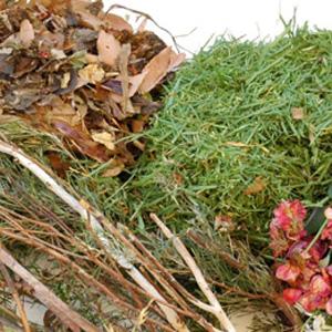 Zeleni odrez